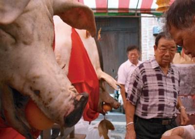 三峽清水祖師祭-賽豬