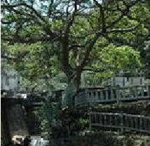 榕樹溪步道