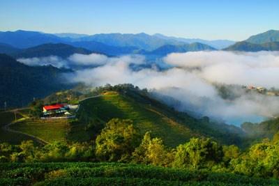 金瓜寮茶香生態村