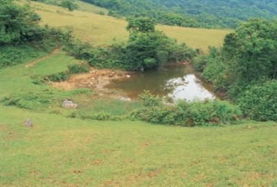 富士坪古道旁牛喝水的水池