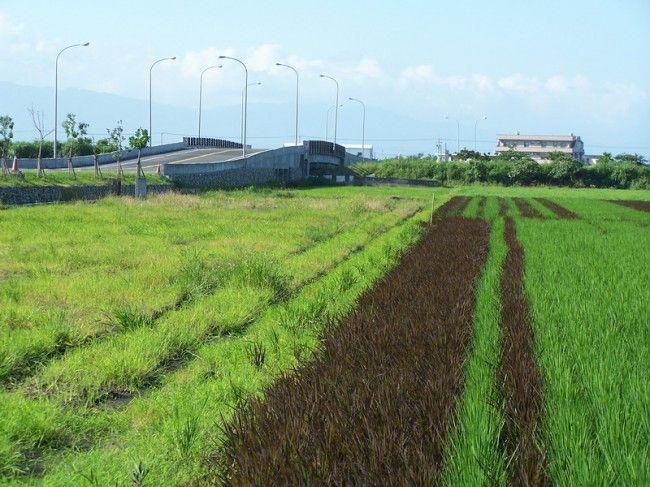 新南休閒農業區