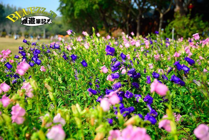南元休閒農場-DSC_6714.JPG