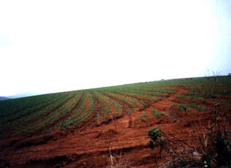 大坪頂農業區