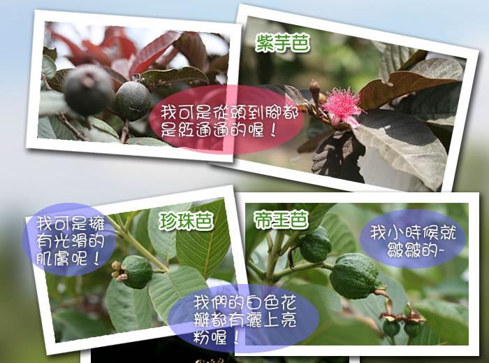菁芩休閒農場.jpg