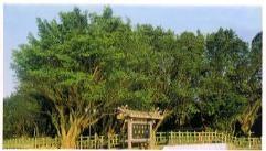 三芝共榮公園