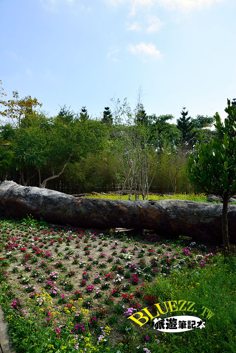 費茲洛公園 躺在地上的巨木