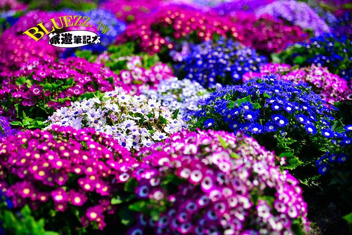 中社觀光花市 02.jpg
