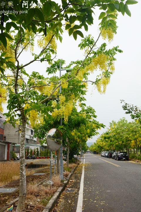 【南投中興新村】黃金雨阿勃勒&荷花季,夏日限定版!-DSC_7679.jpg