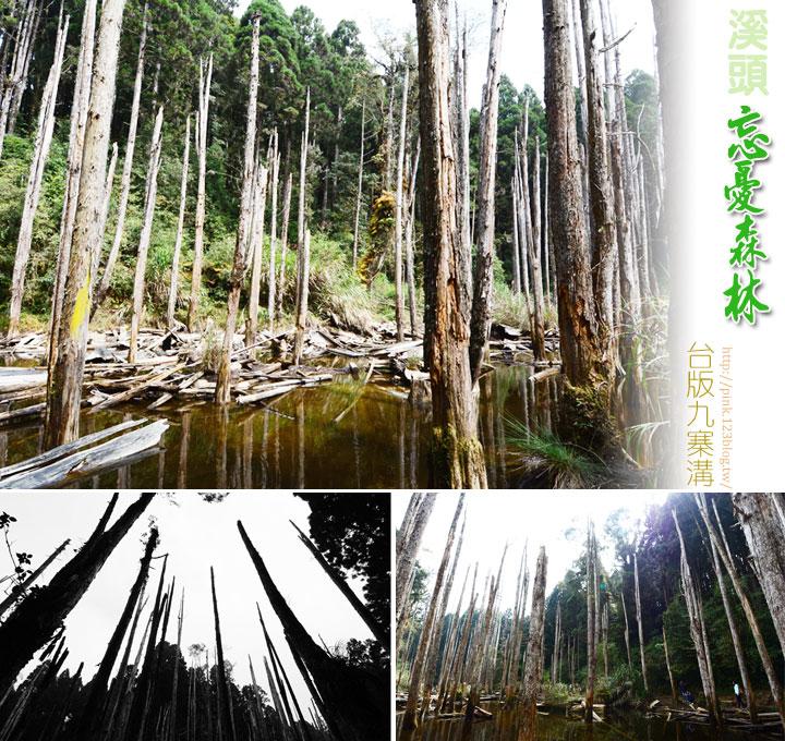 【南投景點】台版九寨溝「忘憂森林」.如詩如畫的人間仙境-1未命名--1.jpg
