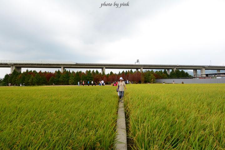 【霧峰景點】秘境~不用飛國外,也能看到美翻天的「落羽松林」,火紅上鏡!-DSC_8479.jpg