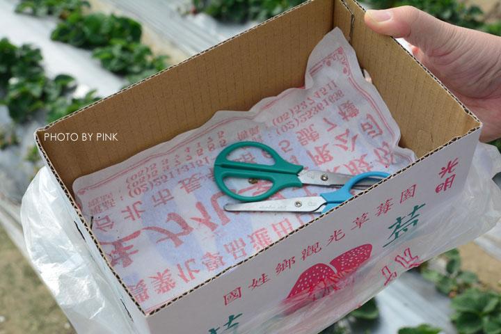 【國姓草莓】光明草莓園-粉紅莓果香甜上市囉!-DSC_2689.jpg