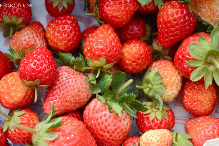 【國姓草莓】光明草莓園-粉紅莓果香甜上市囉!-1DSC_2746.jpg