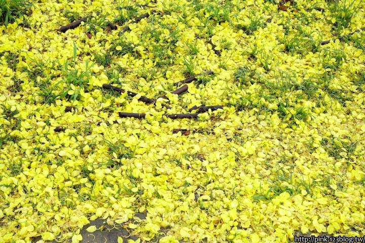 最美的黃金大道「中投公路阿勃勒」美麗盛開中…-DSC00494.jpg