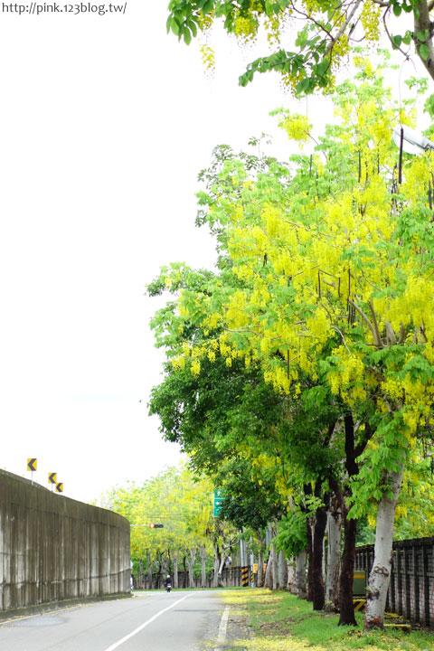 最美的黃金大道「中投公路阿勃勒」美麗盛開中…-DSC00498.jpg