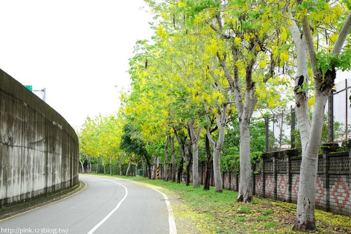 最美的黃金大道「中投公路阿勃勒」美麗盛開中…-DSC00515.jpg