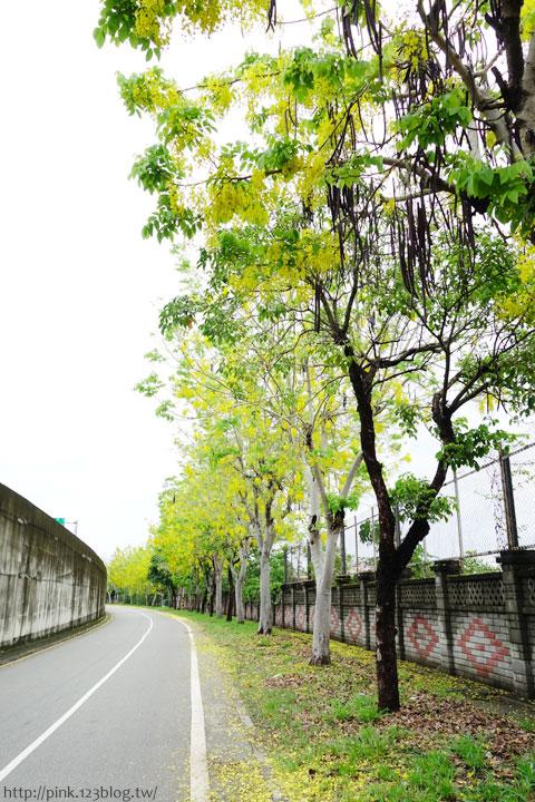 最美的黃金大道「中投公路阿勃勒」美麗盛開中…-DSC00517.jpg