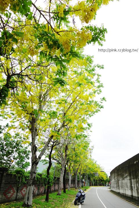 最美的黃金大道「中投公路阿勃勒」美麗盛開中…-DSC00523.jpg