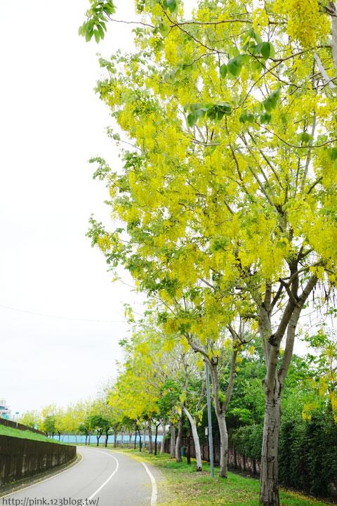 最美的黃金大道「中投公路阿勃勒」美麗盛開中…-DSC00535.jpg