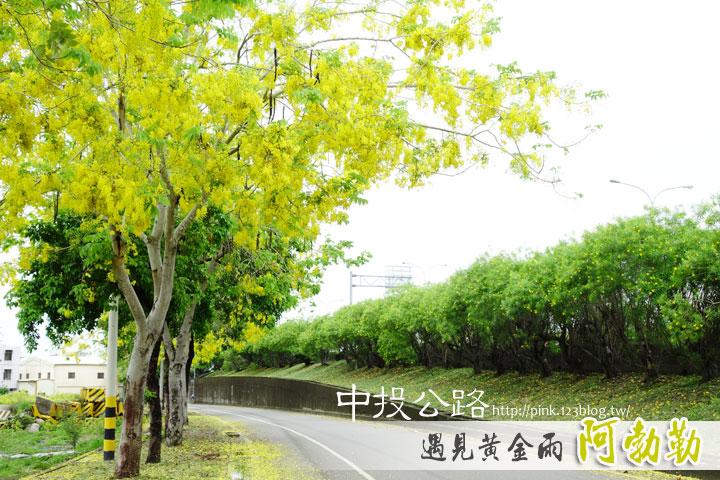 最美的黃金大道「中投公路阿勃勒」美麗盛開中…-1DSC00563.jpg