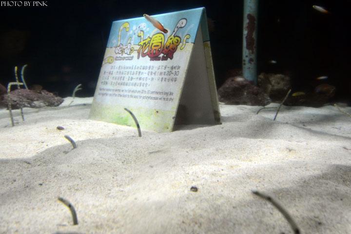 【屏東車城】國立海洋生物博物館。探索海底隧道,豐富海洋知識盡收眼底!-DSC_3135.jpg