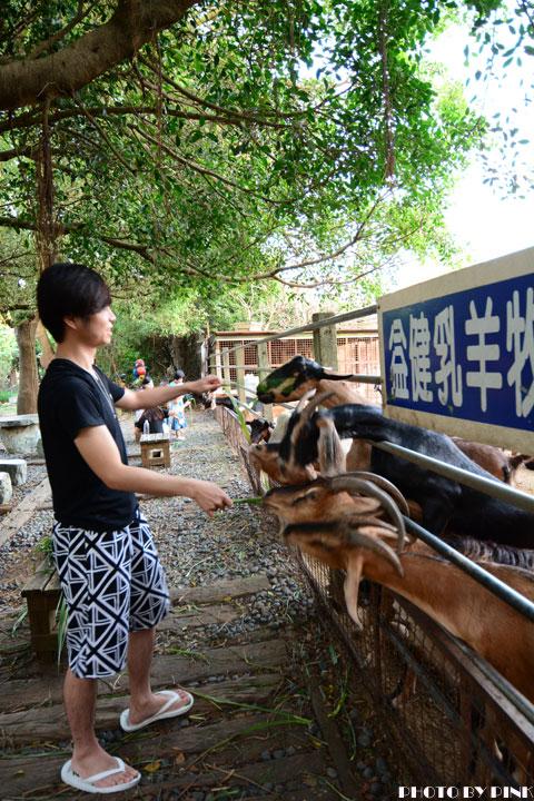 【台中景點】益健乳羊牧場.超有趣的餵羊初體驗!-DSC_4183.jpg