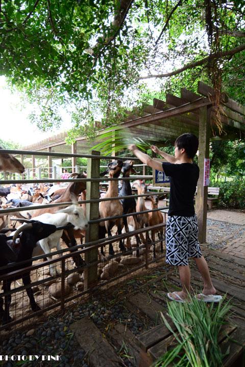 【台中景點】益健乳羊牧場.超有趣的餵羊初體驗!-DSC_4188.jpg