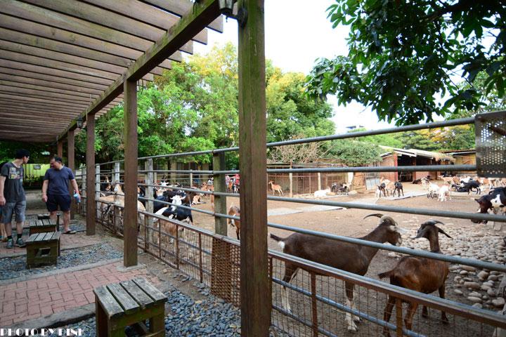 【台中景點】益健乳羊牧場.超有趣的餵羊初體驗!-DSC_4201.jpg