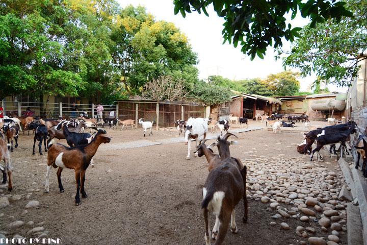 【台中景點】益健乳羊牧場.超有趣的餵羊初體驗!-DSC_4208.jpg