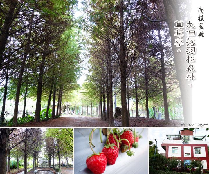 【國姓景點】私人祕境!九佃落羽松森林。順採草莓正是時候!-1.jpg