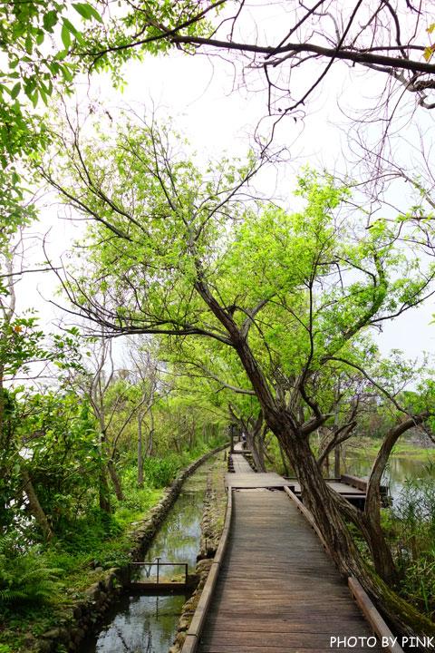 【宜蘭景點】羅東林業文化園區。慢步森林鐵道,享受大自然的洗禮!-DSC08619.jpg