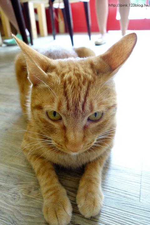 【台中寵物餐廳】貓.旅行咖啡輕食館。超萌寵物貓三劍客,也太療癒了!-DSC06587.jpg