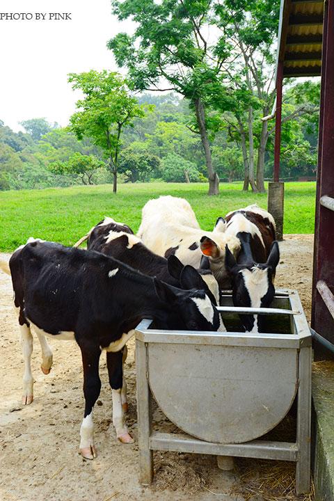 【彰化市景點】日月山景休閒農場。來此可享受親子同遊/餵牛體驗/休閒烤肉/美食餐廳,超好玩的農場新遊憩!-DSC_0369.jpg