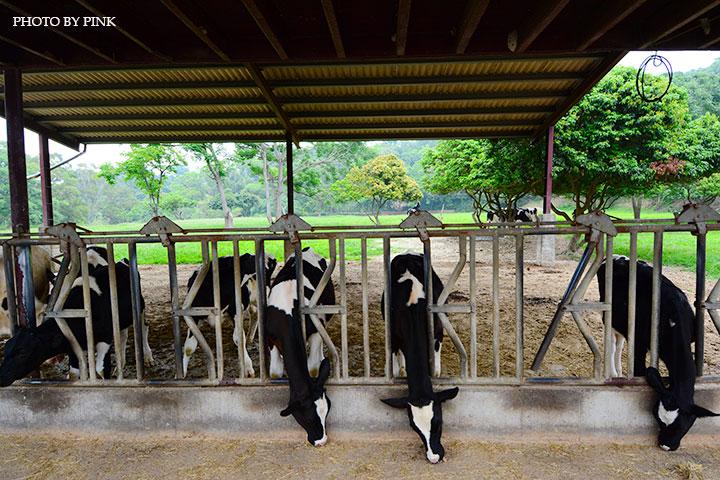 【彰化市景點】日月山景休閒農場。來此可享受親子同遊/餵牛體驗/休閒烤肉/美食餐廳,超好玩的農場新遊憩!-DSC_0401.jpg