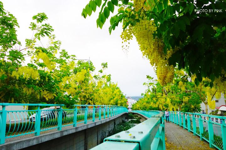 【南投阿勃勒】南投市福崗路上下起了黃金雨,季節限定阿勃勒美麗盛開中。-DSC03170.jpg
