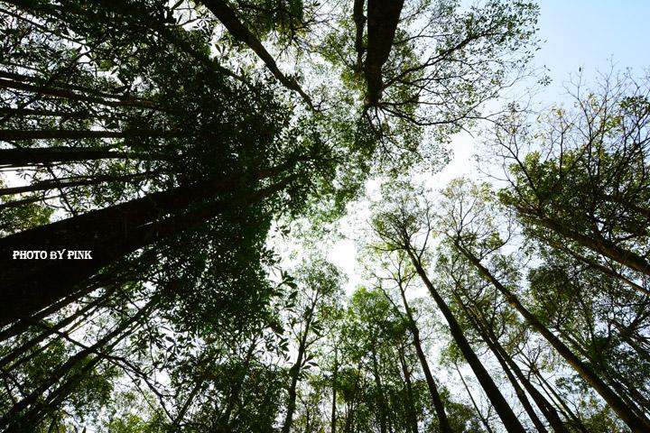 【埔里秘境景點】埔里黑森林。隱藏版夢幻秘境,IG、廣告最佳拍攝點。-DSC_4466.jpg