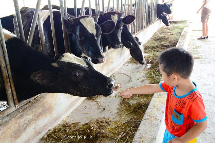 【彰化秀水景點】泳霖牧場。小規模牧場、品嚐牛乳製品、餵食小牛體驗,親子同遊好去處!-DSC_8728.jpg