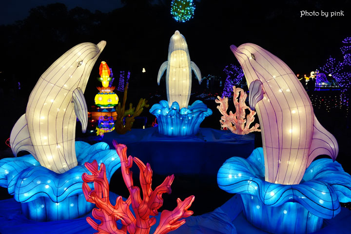 【2019南投市燈會】金豬賀歲來報喜,藍色燈海浪漫極緻,就在中山公園!-DSC04021.jpg