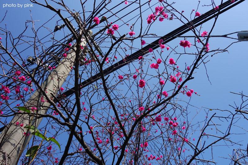 芬園花卉休憩園區-DSC04574.jpg