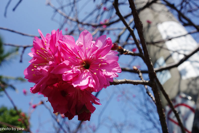芬園花卉休憩園區-DSC04576.jpg