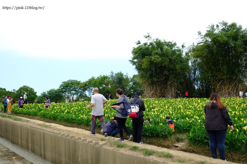 2020黃色海芋田-DSCF0480.jpg