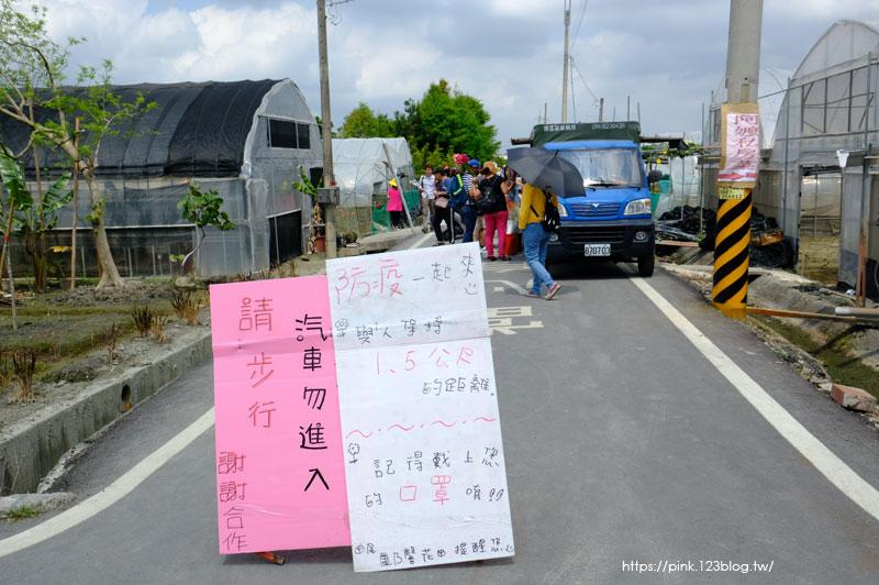 田尾康乃馨花田-DSCF2319.jpg