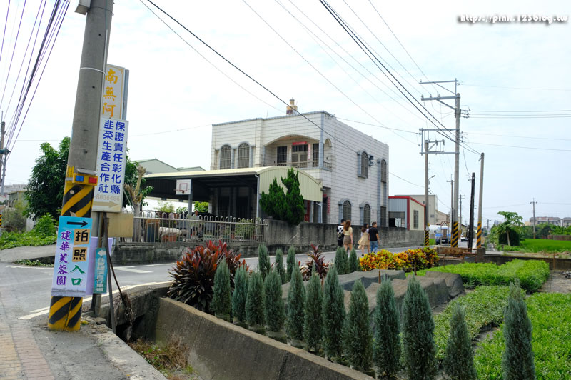 建華芙蓉園(雪白波波草)-DSCF1059.jpg