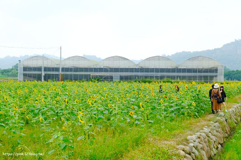 竹山向日葵花海-DSCF3573.jpg