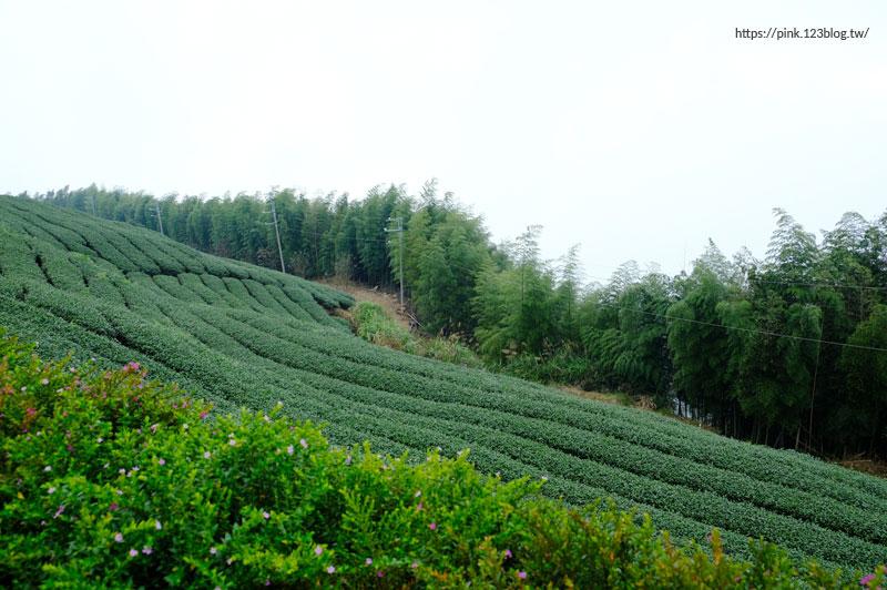 雲嶺之丘&杉林步道-DSCF4808.jpg