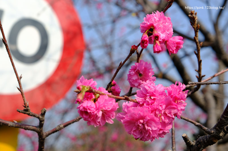 員農種苗.芬園花卉生產休憩園區-DSCF6920.jpg