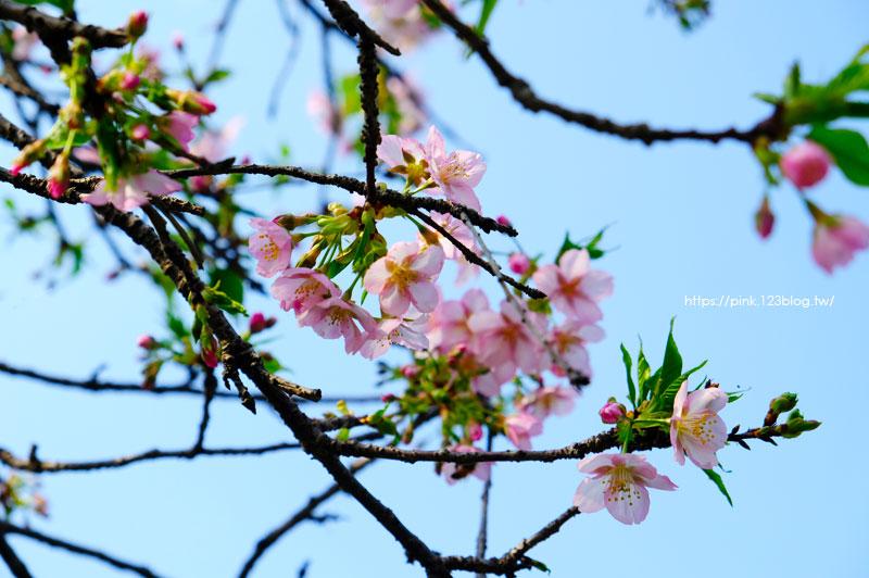 員農種苗.芬園花卉生產休憩園區-DSCF6932.jpg