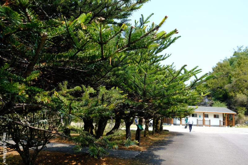 大雪山國家森林遊樂區-DSCF9328.jpg