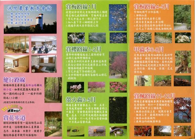 東勢林場櫻花dm2.jpg