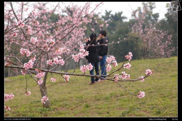石馬公園櫻花00-66419_459745140740575_1135250598_n.jpg