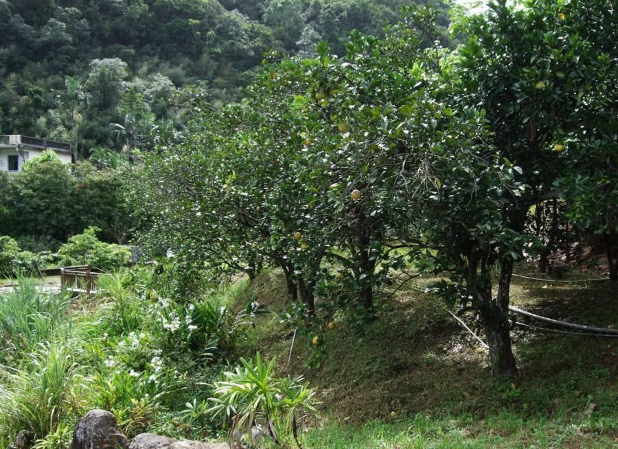 苓蘭生態農園3